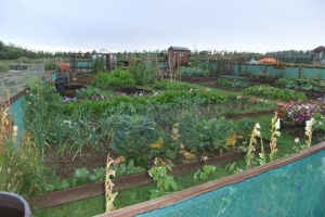 Douglas Allotments