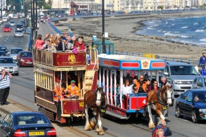 Future of horse trams: Joint statement from Council and Department of Infrastructure