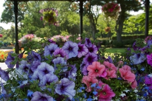 Douglas in Bloom 2014 entry forms now available