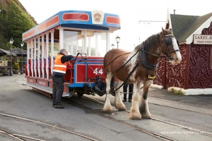 Post mortem reveals tram horse died from cardiac failure